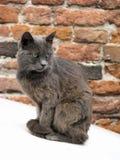 Verticale grise de chat Photo stock