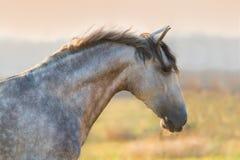 Verticale grise de cheval images libres de droits