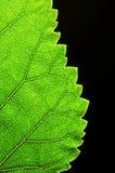 Verticale groene bladrand Stock Fotografie