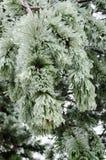 Verticale ijspijnboom, Stock Afbeelding