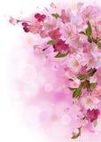 Verticale kaart met zachte roze sakurabloemen Royalty-vrije Stock Fotografie