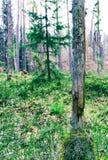 Verticale trillende groene dramatische boom bokeh achtergrond Royalty-vrije Stock Foto's