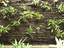 Verticale tuin royalty-vrije stock afbeeldingen