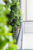 Verticale tuin bij balkon Stock Afbeeldingen