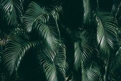 Verticale tuin met tropisch groen blad royalty-vrije stock foto's