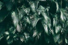 Verticale tuin met tropisch groen blad, Donkere toon stock foto