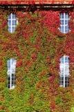 Verticale verde della parete a Cityhall a Stoccolma fotografia stock libera da diritti