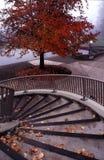 Verticales d'automne Images libres de droits
