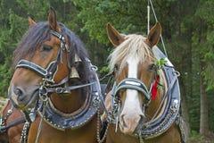 Verticales de cheval images libres de droits
