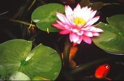 Verticales de jardin de l'eau photographie stock