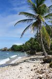 Vertically exposed palm tree on white sand beach. stock photography