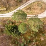 Vertically taken aerial photograph of an almost forty metre high old giant pine tree on the edge of a turning loop in a forest rid. Ge with large spruce, pine Royalty Free Stock Photography