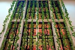 Verticle-Garten mit Reflexionsfenster Stockfotografie