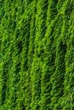 Verticle-Grün, das ein Gebäude klettert stockfotos