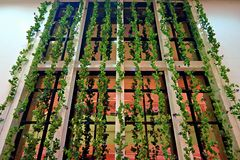 Verticle trädgård med reflexionsfönstret Arkivbild