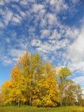 Verticlebeeld van dalingsgebladerte in geel en gouden tegen blauwe hemel backgr Royalty-vrije Stock Foto