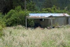 Vertiente de Nueva Zelanda Foto de archivo