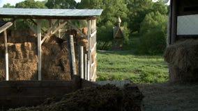 Vertiente del heno y de madera bien en la opinión de día de verano almacen de video