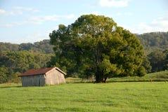 Vertiente vieja al lado de un árbol Foto de archivo libre de regalías