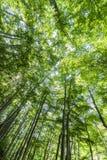 Vertigo under trees Royalty Free Stock Photo
