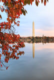 Vertikal Autumn Washington DC-monument Royaltyfria Bilder