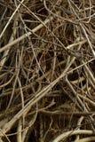 Vertikal bakgrund av tilltrasslade wisteriavinrankor Royaltyfria Foton