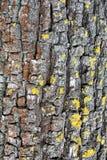 Vertikal bakgrund för trädskäll Royaltyfria Bilder