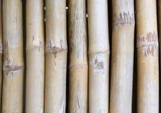 Vertikal bambubakgrund för närbild arkivfoto