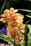 Vertikal bild av den härliga exotiska orkidén i tropisk trädgård Arkivfoto