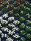 Vertikal grönsakträdgård Royaltyfria Bilder