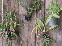 Vertikal orkidéträdgård med det mjuka ljuset Royaltyfri Bild