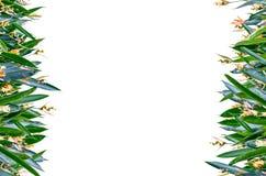 Vertikal ram för blomma Royaltyfri Fotografi