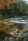 Vertikal sikt av lövverk och snabba flodforsar, New Hampshire Royaltyfri Foto