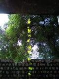 Vertikal skönhet Royaltyfria Bilder