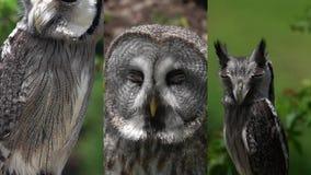 1 3 Vertikal video för sociala massmediaapplikationer på mobila enheter Olika Owl Portraits lager videofilmer