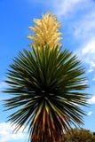 vertikal yucca royaltyfri foto