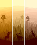 Vertikala baner av barrträds- trä för kullar. Royaltyfri Foto
