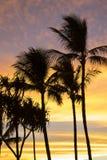 Vertikala palmträd i kontur mot solnedgång fördunklar i rosa färger arkivbilder
