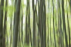Vertikala Pan Of Trees abstrakt skog Royaltyfria Bilder