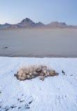 Vertikala Sage Brush Frozen Ground Salt sänker den Utah öknen Fotografering för Bildbyråer