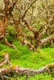 vertikala skogpolylepis Royaltyfria Bilder