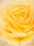 Vertikale Abstraktion mit einer gelben Rose Stockfoto