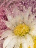 Vertikale Abstraktion mit Kamillenblumen Lizenzfreies Stockbild