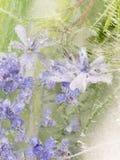 Vertikale Abstraktion von Lavendelblumen Stockbild