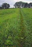 Vertikale der Wiese im Frühjahr - Stockfotos