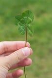 Vertikale des vierblättrigen Kleeblattes in der Hand auf einem Grün stockbilder