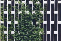 Vertikale, die auf einem Metallchromgitter im Garten arbeitet stockfoto