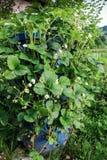 Vertikale Gartenarbeit, Erdbeerfaß stockbilder