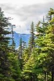 Vertikale Landschaftsansicht von alpinen Bäumen und von Schnee bedeckten Bergen lizenzfreie stockbilder
