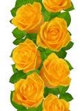 Vertikale nahtlose Grenze mit gelben Rosen Lokalisiert auf weißem Ba Stockbild